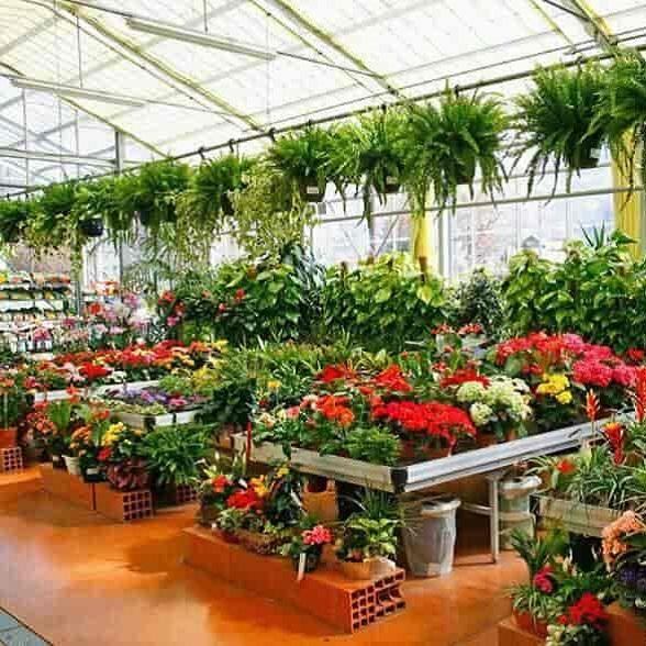 Plants and Nursery